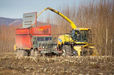 Experimental biomass harvest a step toward sustainable, biofuels-powered future | Bio-Feedstock | Scoop.it