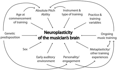 Does music training change the brain? | Music | Scoop.it