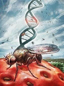L'Europe s'apprête à ouvrir la porte aux animaux et insectes génétiquement modifiés ! | ENTREPRISE & ENVIRONNEMENT | Scoop.it