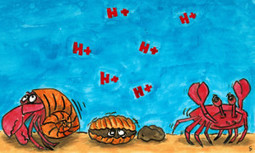 Increase in Ocean Acidification Threatens Longevity of Shellfish and Coral | Earth Changes | Scoop.it