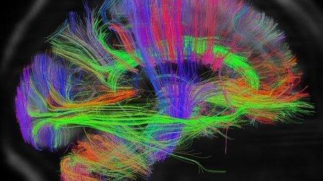 Scientists create 3D digital brain | Creating Infographics | Scoop.it