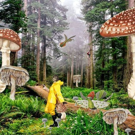 Elenore's Adventures In A World Of #Collage #art #surreal | Luby Art | Scoop.it