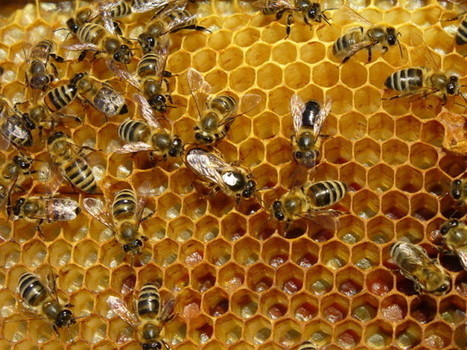 Free basic beekeeping class coming in March; hive-splitting program Feb. 8 | The Leader | CALS in the News | Scoop.it