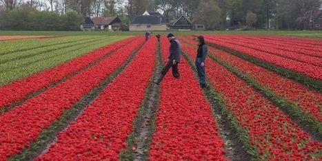 Aux Pays-Bas, on travaille en moyenne 30heures par semaine | whynotblogue | Scoop.it