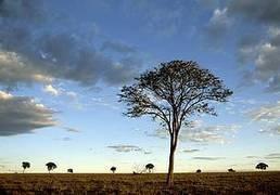 WWF - Rapport Planète Vivante 2016 : deux tiers des populations de vertébrés pourraient disparaitre d'ici 2020 | Planete DDurable | Scoop.it