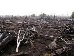 WRI Releases Updated Data on the Fires in Indonesia | WRI Insights | Sustain Our Earth | Scoop.it