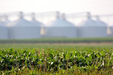 Supreme Court Considers GM Crop Patent Case | Vertical Farm - Food Factory | Scoop.it