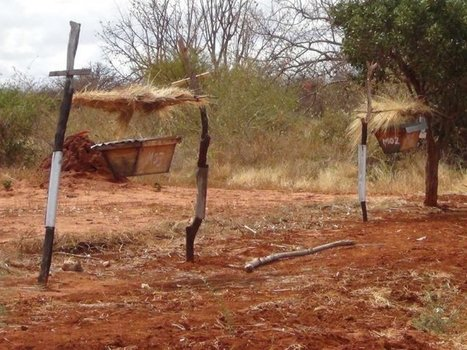 Beehive fences can stop elephants from farms, study confirms | Pachyderm Magazine | Scoop.it