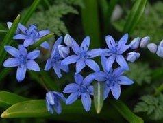 Fleurs printanières | Nature Aubrac | L'Aveyron | Scoop.it