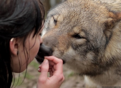 White Wolf: The Mysterious Connection Between Wolves and Women (Video) | Saving All Animals | Scoop.it