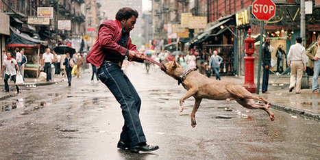 New Film Profiles NYC's Greatest Street Photographers | Documentary Landscapes | Scoop.it