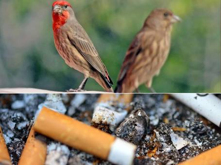 Marlboro palace: how city birds feather their nests | InfoGraphicPlanet | Scoop.it