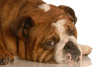 Is Your Dog Depressed? How to Recognize the Symptoms & Some Simple Solutions | Pets | Scoop.it