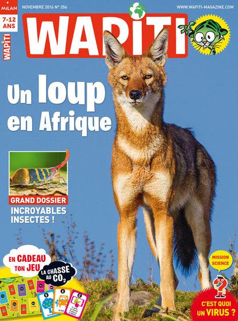 Le loup d'Éthiopie, chasseur solitaire - Wapiti | Les revues de la médiathèque | Scoop.it