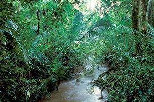 RDC : La conversion des forêts pour l'agriculture commerciale devient de plus en plus une menace croissante pour le bassin du Congo   Nature, climat, environement et santé   Scoop.it