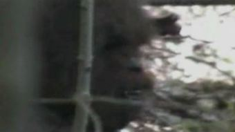 Group of Bigfoot enthusiasts share never before seen video ... | Legends and Myths | Scoop.it
