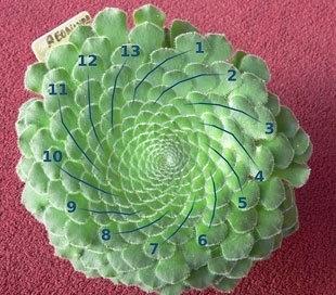 Las matemáticas ocultas en la naturaleza... hay algunas coincidencias curiosas   Informe21.com   Educación Matemática   Scoop.it