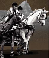 Equitation foxoo : Concours international d'attelage à Pau | Couleurs d'Automne | Scoop.it