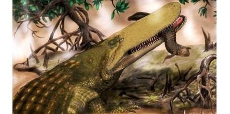 Un ancien crocodile découvert au Maroc   Aux origines   Scoop.it