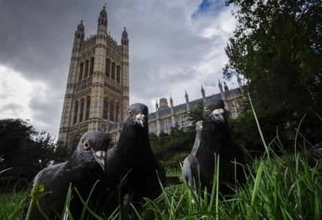 Urban wildlife  in pictures | GarryRogers NatCon News | Scoop.it