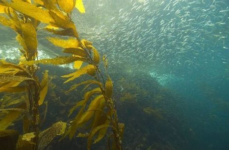 World's Oceans Are Gasping for Breath : DNews | ecology and economic | Scoop.it