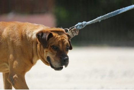 Dogs will misbehave if it means eventual treat | Top Dogumentary | Dog Pictures - Pindoggy | Scoop.it