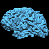 Neuroscientists discover brain circuits involved in emotion   Social Neuroscience Advances   Scoop.it