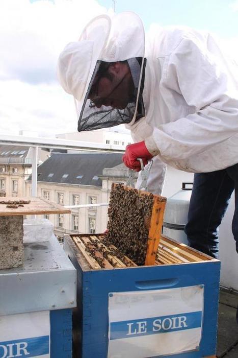Les abeilles habitent au 100, rue Royale | Nous avons besoin des abeilles | Scoop.it