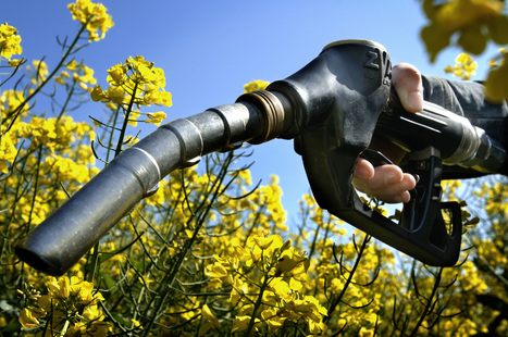 Why woody biofuels wouldn't be the best plan for the EU | Conformable Contacts | Scoop.it