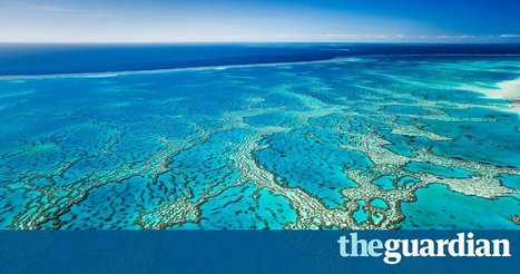 Revealed: report for Unesco on the Great Barrier Reef that Australia didn't want world to see | Marine Conservation Research | Scoop.it
