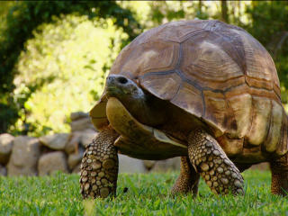 The Race To Save The Turtle and the Tortoise - VIDEO REPORT