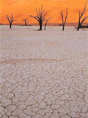 Desert Threats, Endangered Species - National Geographic | Ecosystems | Scoop.it