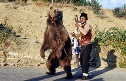 Rescue Bears from Abusive Circus | Bears | Scoop.it