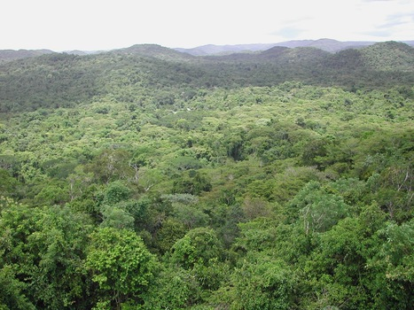 Nature: Pathogens and insect herbivores drive rainforest plant diversity and composition (2014) | SEFitopatologia | Scoop.it