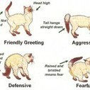 Making Peace with Aggressive Cats | In Your Pet's Best Interest | Scoop.it
