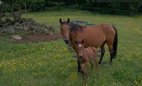 Τα άλογα | ΤΡΑΠΕΖΑ ΥΛΙΚΟΥ 2013-2014 | Scoop.it