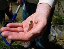 Bug blitz reveals health of Canberra waterways - The West Australian | Catchment studies in geography | Scoop.it