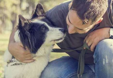 Dogs May Be Man's Best Medicine, Too | MSN Health & Fitness | CALS in the News | Scoop.it