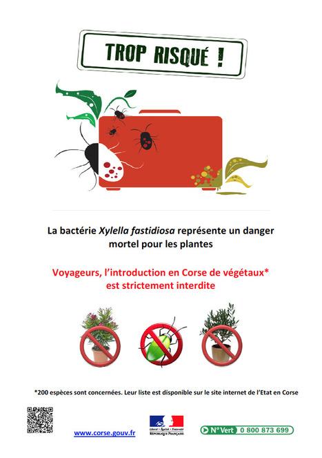 Xylella Fastidiosa : Avis d'information aux voyageurs (2015) | Plants and Microbes | Scoop.it