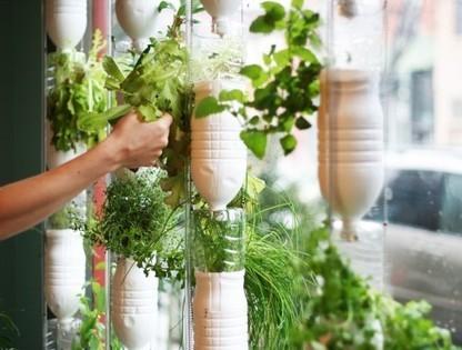 Faire pousser des légumes dans son appartement avec le système des Windowfarms | ecoloPop | elkabor | Scoop.it