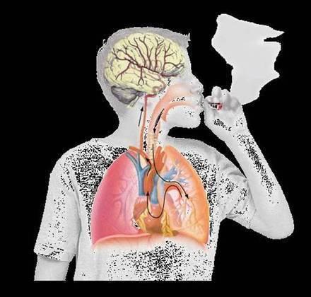 1) De l'absorption jusqu'au cerveau - Cannabis et THC | les effet du cannabis sur notre système nerveux | Scoop.it