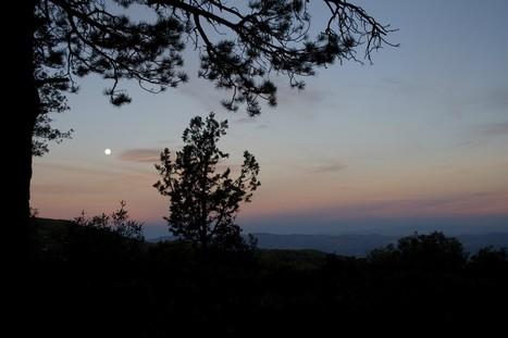 Full Moonlight Hike | Redwoods | Scoop.it