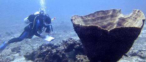 Myanmar research reveals underwater treasures   Travel to Myanmar   Scoop.it