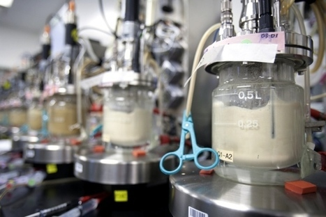 Synthetic biologists seek standards for nascent field   SynBioFromLeukipposInstitute   Scoop.it