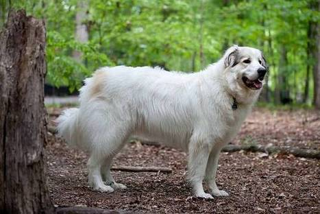 A fantastic way to help your therapy dog training utah - Share Commission | dog grooming utah | Scoop.it