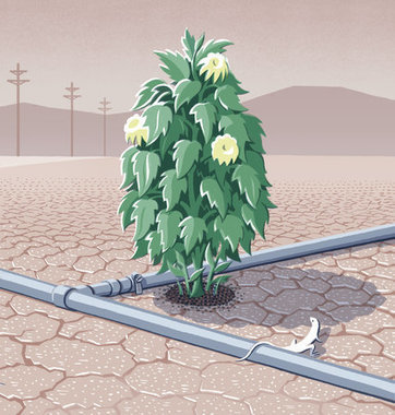 How California Is Winning the Drought | Memoirs of a Chonga | Scoop.it