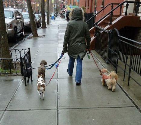 Start Your Own Dog Walking Business | Dog Training - Mark Mendoza | Scoop.it