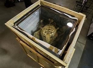 AP PHOTOS: Warehouse exposes cost of illegal wildlife trade - WHNS Greenville | Conservation | Scoop.it
