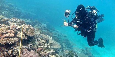 Australie: année noire pour la Grande Barrière de corail - le Monde | Actualités écologie | Scoop.it