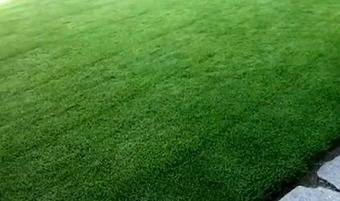 Zoysia Grass: Zoysia Grass Reviews - Is this the Right Grass for Your Lawn? | Zoysia Grass Plugs Review | Scoop.it